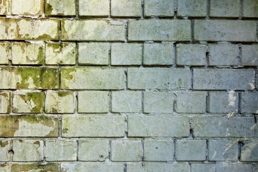 Behang en schimmel verwijderen: 2 zaken die aandacht vragen bij het herinrichten van je huis
